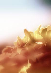 Junisonne von Ulrike Haberkorn