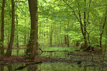 Sumpfgebiet im grünen Wald  by Ulrike Haberkorn