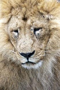 König der Tiere von Gordon Below