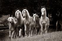 horses von Gordon Below