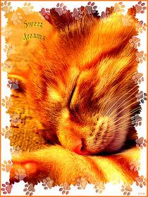 sweet dreams  by Sandra Vollmann.W.