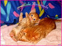 Katzen Cats Kitten Kinderstube rote Kätzchen junge by Sandra Vollmann.W.