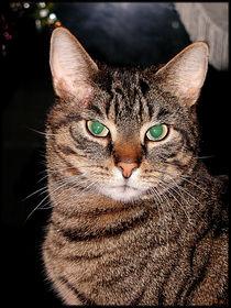 Charming Cat by Sandra Vollmann.W.
