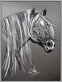 Pferdepersönlichkeit von Sandra Vollmann.W.