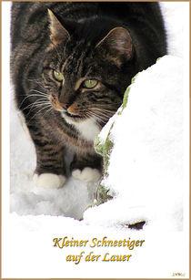 little Snowtiger von Sandra Vollmann.W.
