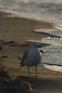 Strandgang von Jakob Wilden