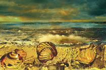 Muscheln am Strand von artesigno