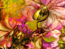 Orchidee von artesigno