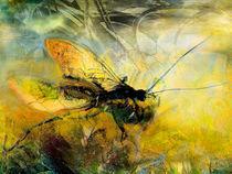 Die Fliege by artesigno