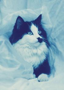 Cat In Blue von annequins