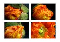 Open Your Heart | Orangefarbene Islandmohnblüte von lizcollet