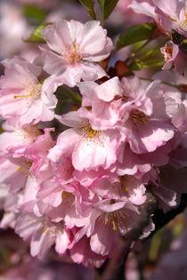 Springtime von lizcollet