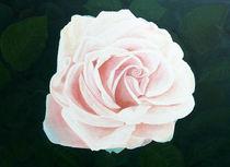 Schöne Rose Blash by Horst J. Kesting