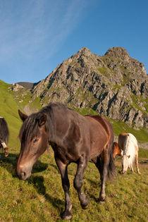 Pferde auf der Alm by Johannes Netzer