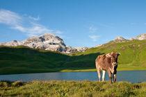 Glückliche Kühe by Johannes Netzer