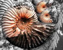 snail by Angela Parszyk