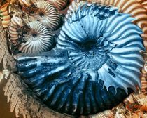 blue snail by Angela Parszyk
