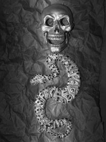 Giftschlange von Angela Parszyk