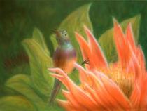 Kolibri 2 von Christoph E. Hampel