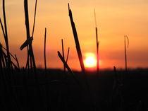Sonnenuntergang 003 von Elke Schmidt