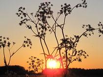 Sonnenuntergang 007 von Elke Schmidt