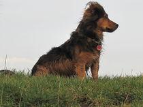 Hund mit Weitblick