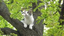 Katze in der Eiche