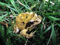Frosch von Vasilika Schnitzer