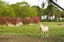 Pferd in Spanien von Grzegorz Bieniek