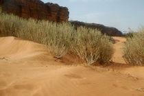 Sahelzone 09 von Walter Vymyslicky
