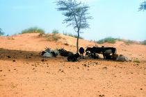Sahelzone 03 von Walter Vymyslicky