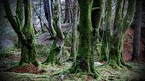 speaking trees by Birgit Fischer