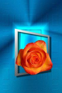 Rose im Rahmen by Elke Tietz