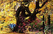 Herbst 3 von Uschy Baumgarten