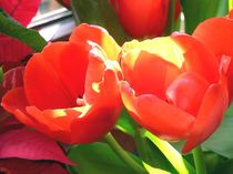 zwei tulpen von Uschy Baumgarten