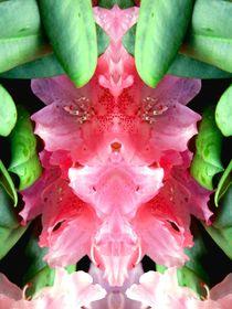 pink panther im busch von Uschy Baumgarten