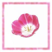 Tulpe von Wolfram Otlinghaus