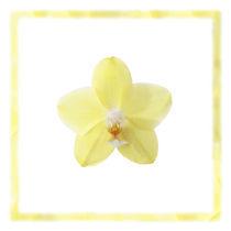 Gelbe Orchidee von Wolfram Otlinghaus