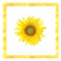 Sonnenblume von Wolfram Otlinghaus
