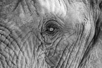 Elefant von claudia Otte