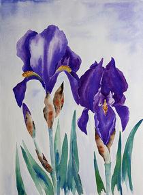 Iris von farbart