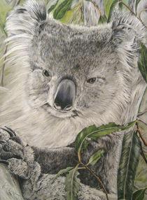 Koala von farbart