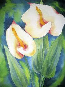 Weiße Anthurien von farbart