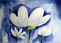 Weiße Gänseblümchen abstrakt von farbart