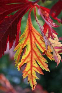 Herbstblatt von farbart