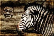 Zebra von Ralf Drischel-Kubasek