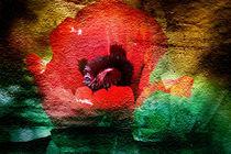 Roter Mohn I von Ralf Drischel-Kubasek