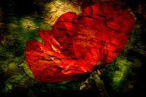Roter Mohn II von Ralf Drischel-Kubasek