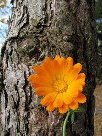 OrangeFlowerPower von Timo Gugel