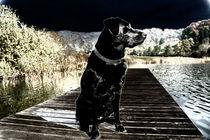 Labrador von snorkelingpearl